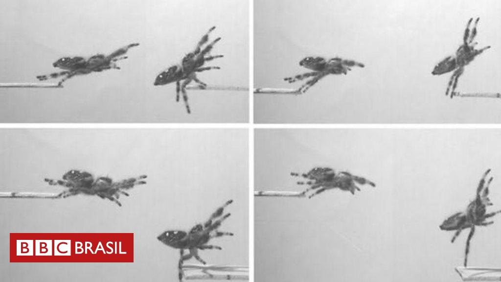 Ciência desvenda truque da aranha para saltar sobre sua presa